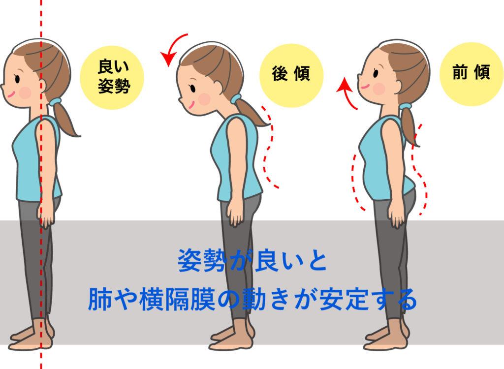 横隔膜の動きが安定する