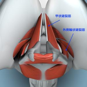 声門閉鎖の際に働く筋肉