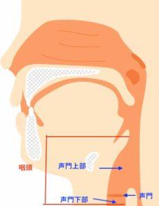 声門と咽頭